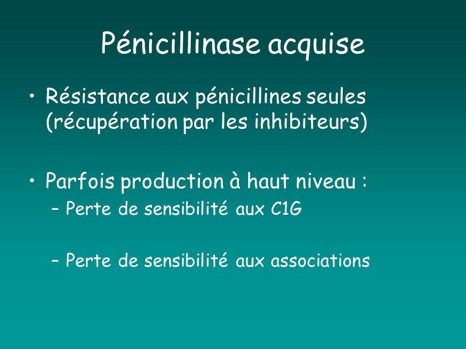 Pénicillinase acquise Résistance aux pénicillines seules (récupération par les inhibiteurs) Parfois production à haut niveau : –Perte de sensibilité a