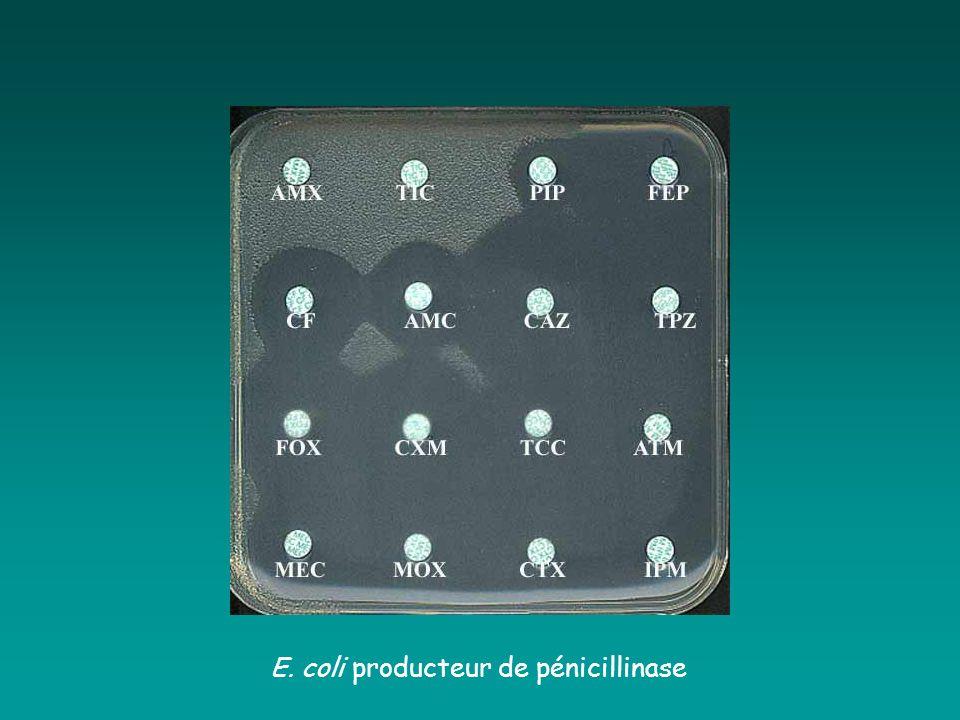 E. coli producteur de pénicillinase