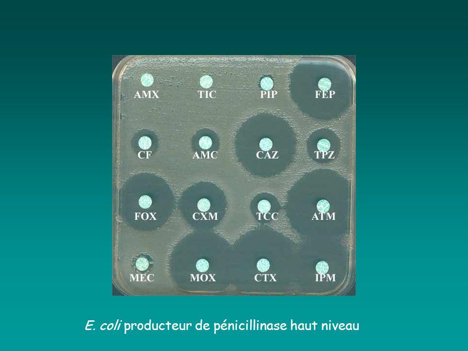 E. coli producteur de pénicillinase haut niveau
