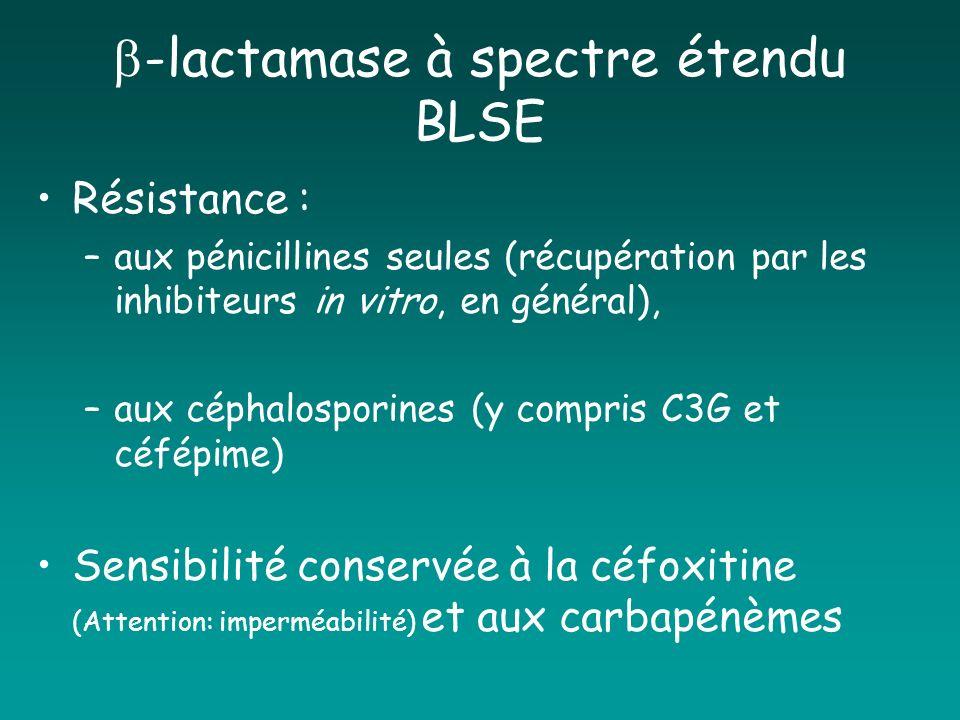 -lactamase à spectre étendu BLSE Résistance : –aux pénicillines seules (récupération par les inhibiteurs in vitro, en général), –aux céphalosporines (