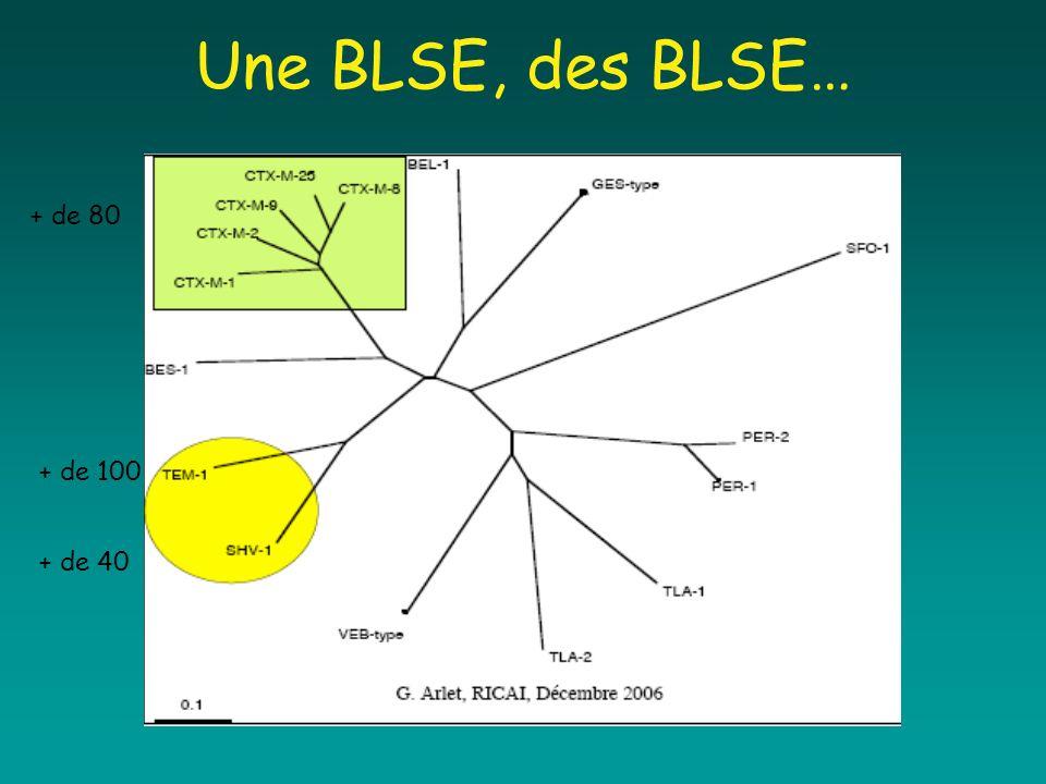 Une BLSE, des BLSE… + de 100 + de 40 + de 80
