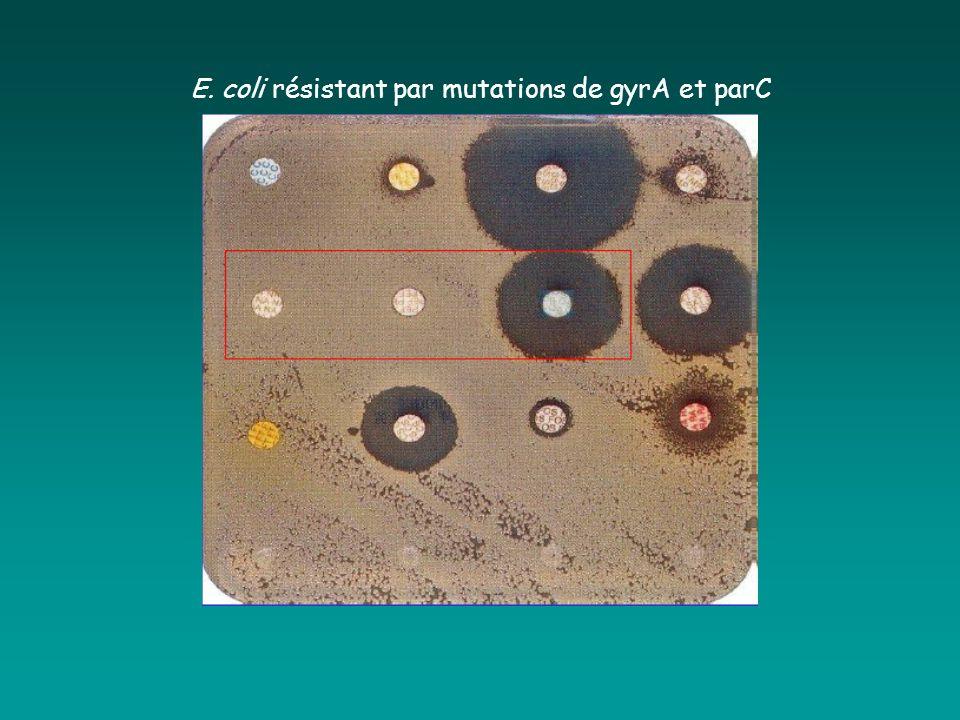 E. coli résistant par mutations de gyrA et parC