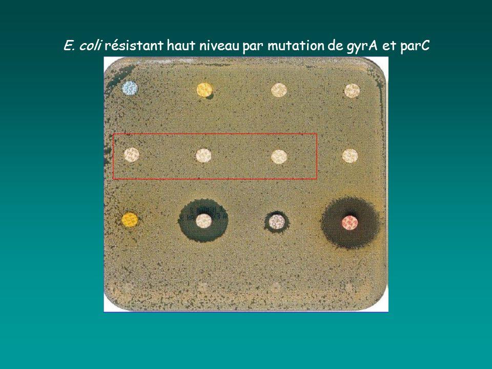 E. coli résistant haut niveau par mutation de gyrA et parC