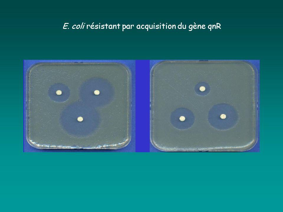 E. coli résistant par acquisition du gène qnR