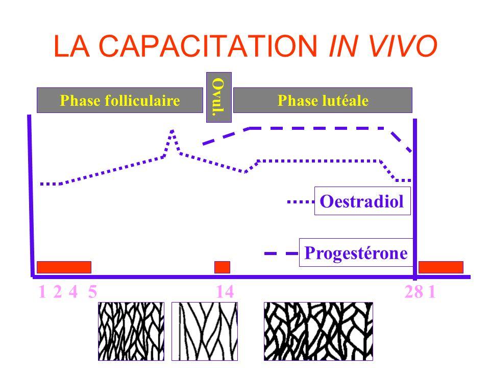 LA CAPACITATION IN VIVO 124528141 Phase folliculairePhase lutéale Ovul. Progestérone Oestradiol