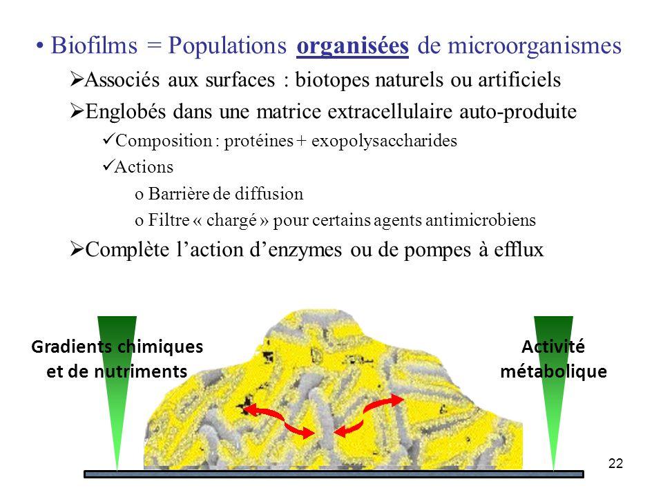 22 Gradients chimiques et de nutriments Activité métabolique Biofilms = Populations organisées de microorganismes Associés aux surfaces : biotopes nat
