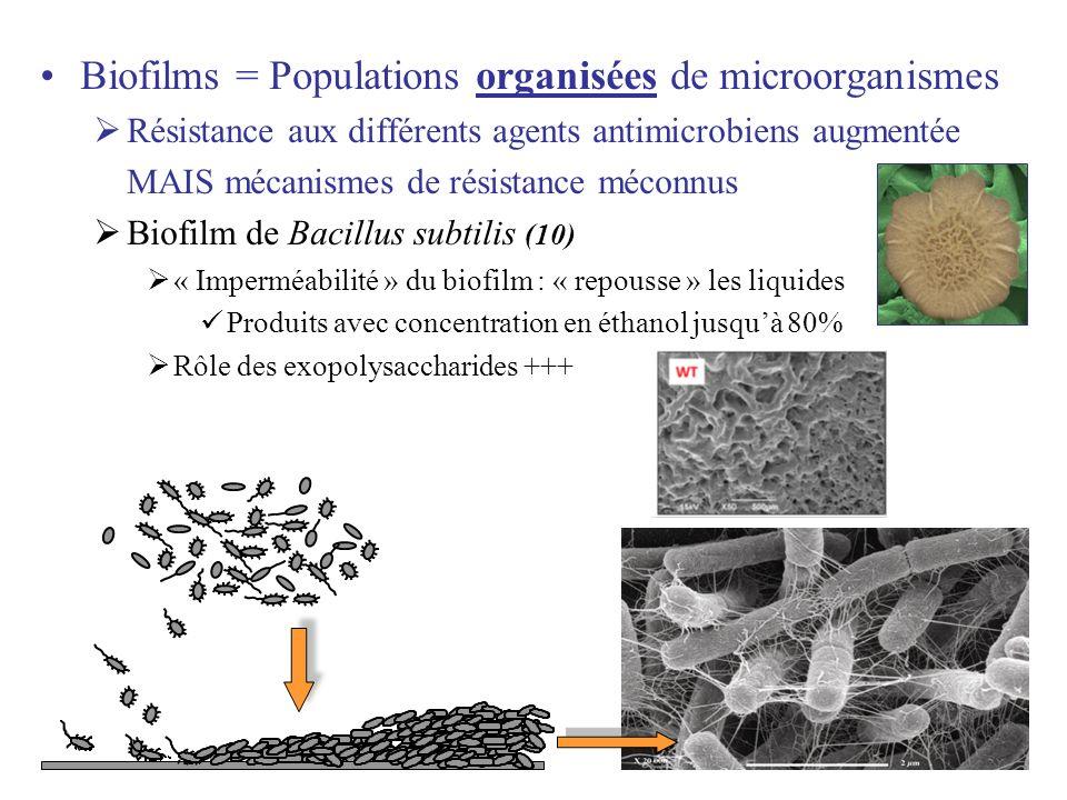 23 Biofilms = Populations organisées de microorganismes Résistance aux différents agents antimicrobiens augmentée MAIS mécanismes de résistance méconn