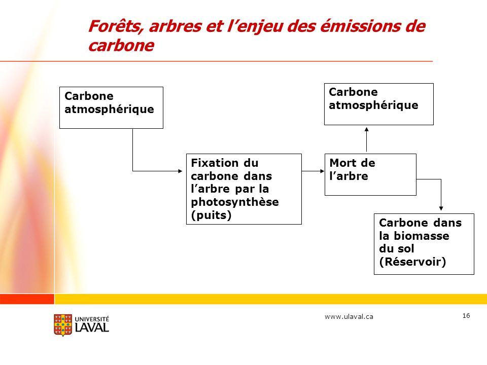www.ulaval.ca 16 Forêts, arbres et lenjeu des émissions de carbone Mort de larbre Fixation du carbone dans larbre par la photosynthèse (puits) Carbone