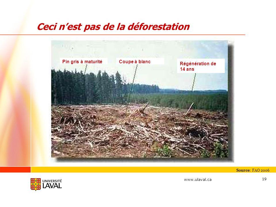www.ulaval.ca 19 Ceci nest pas de la déforestation Source: FAO 2006 Pin gris à maturitéCoupe à blanc Régénération de 14 ans