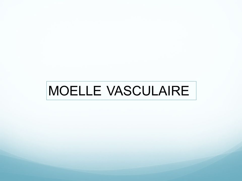 MOELLE VASCULAIRE