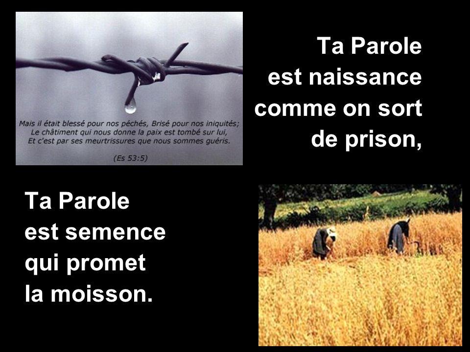 Ta Parole est naissance comme on sort de prison, Ta Parole est semence qui promet la moisson.