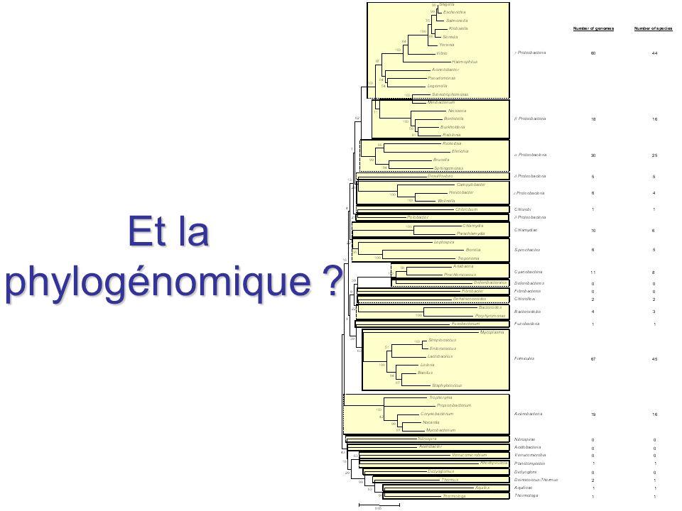 Et la phylogénomique ?