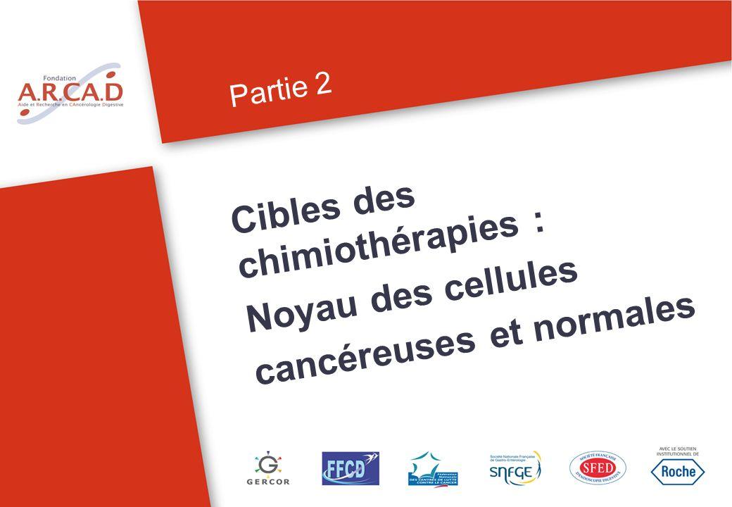 Partie 2 Cibles des chimiothérapies : Noyau des cellules cancéreuses et normales