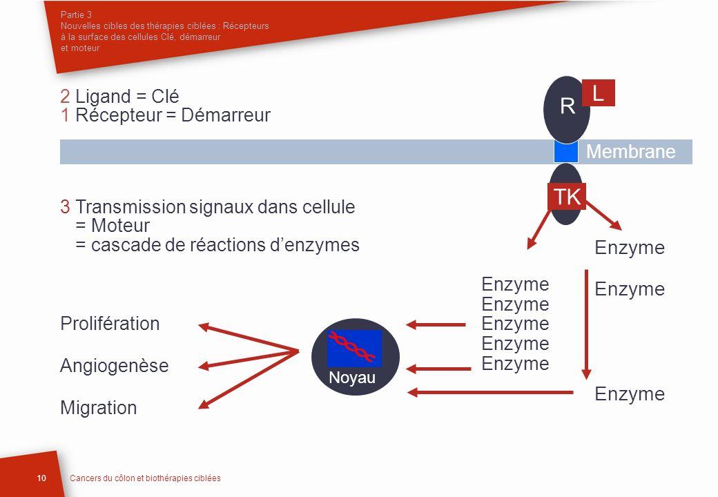 Partie 3 Nouvelles cibles des thérapies ciblées : Récepteurs à la surface des cellules Clé, démarreur et moteur 10Cancers du côlon et biothérapies cib