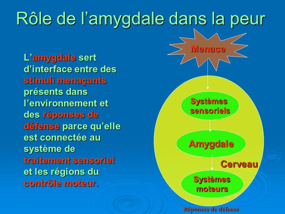 Rôle de lamygdale dans la peur Lamygdale sert dinterface entre des stimuli menaçants présents dans lenvironnement et des réponses de défense parce que