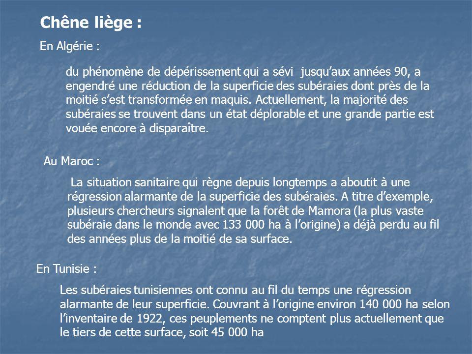 Chêne liège : En Algérie : du phénomène de dépérissement qui a sévi jusquaux années 90, a engendré une réduction de la superficie des subéraies dont p