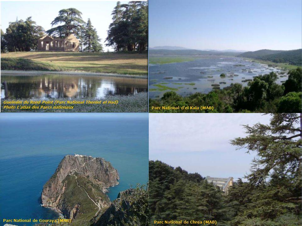 État actuel de la forêt algérienne Durant loccupation française, ce sont plus de 1.000.000 dhectares qui seront détruit.