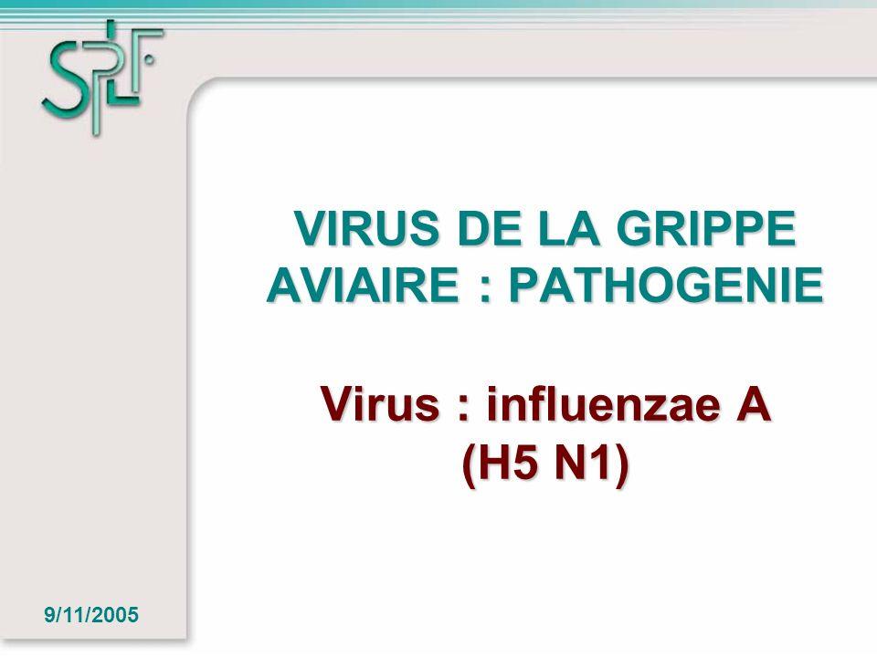 VIRUS DE LA GRIPPE AVIAIRE : PATHOGENIE Virus : influenzae A (H5 N1) 9/11/2005