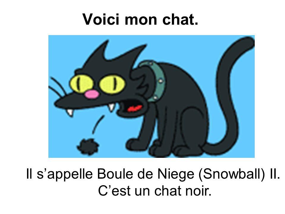 Voici mon chat. Il sappelle Boule de Niege (Snowball) II. Cest un chat noir.