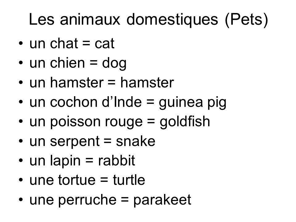 Les animaux domestiques (Pets) un chat = cat un chien = dog un hamster = hamster un cochon dInde = guinea pig un poisson rouge = goldfish un serpent = snake un lapin = rabbit une tortue = turtle une perruche = parakeet