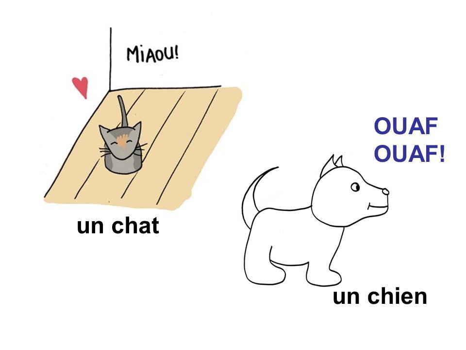 OUAF OUAF! un chat un chien