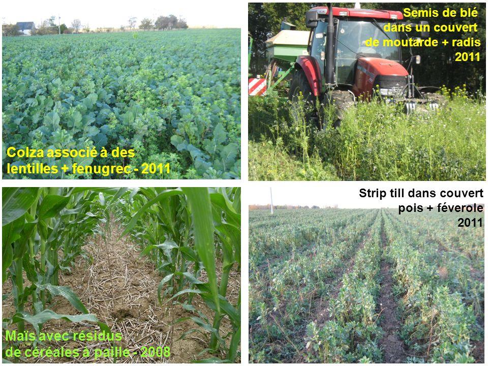 Maïs avec résidus de céréales à paille - 2008 Strip till dans couvert pois + féverole 2011 Colza associé à des lentilles + fenugrec - 2011 Semis de bl
