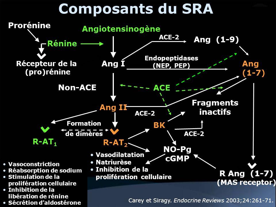 Composants du SRA Angiotensinogène Ang I Rénine Ang II BK ACE Vasoconstriction Réabsorption de sodium Stimulation de la prolifération cellulaire Inhib