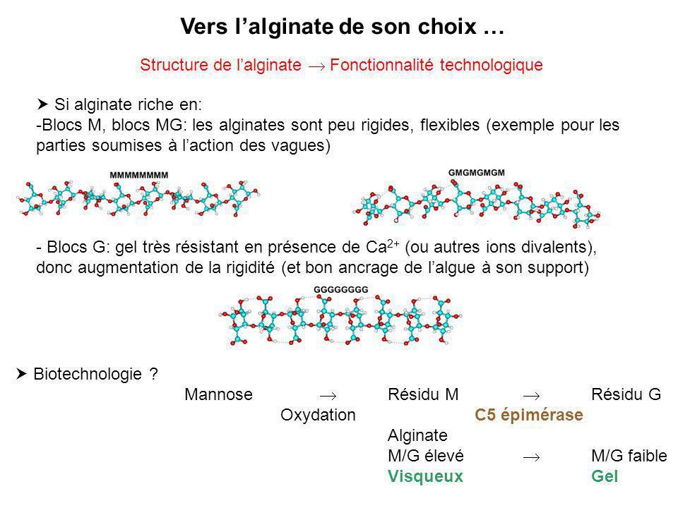 Si alginate riche en: -Blocs M, blocs MG: les alginates sont peu rigides, flexibles (exemple pour les parties soumises à laction des vagues) - Blocs G