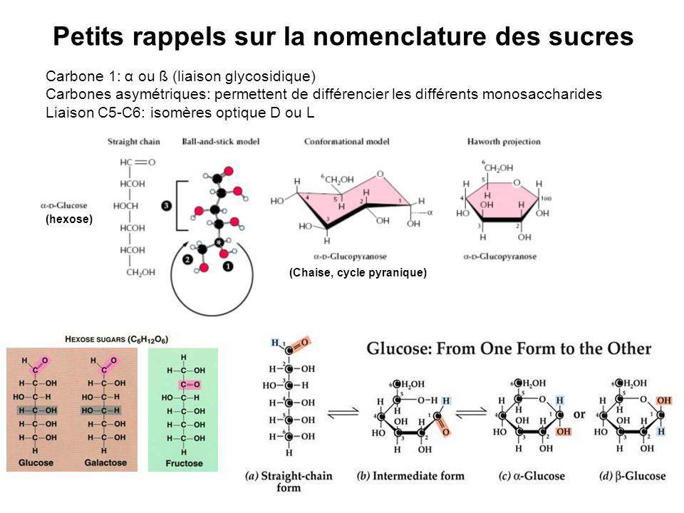 Petits rappels sur la nomenclature des sucres Carbone 1: α ou ß (liaison glycosidique) Carbones asymétriques: permettent de différencier les différent