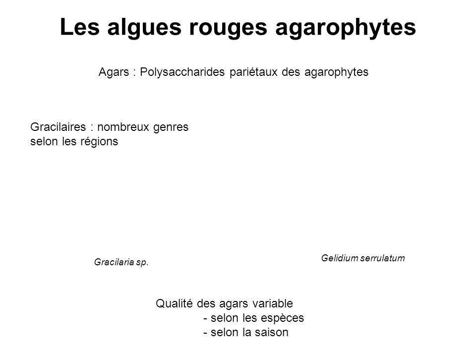 Gracilaria sp. Les algues rouges agarophytes Agars : Polysaccharides pariétaux des agarophytes Gracilaires : nombreux genres selon les régions Qualité