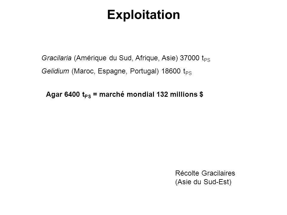 Exploitation Gracilaria (Amérique du Sud, Afrique, Asie) 37000 t PS Gelidium (Maroc, Espagne, Portugal) 18600 t PS Agar 6400 t PS = marché mondial 132