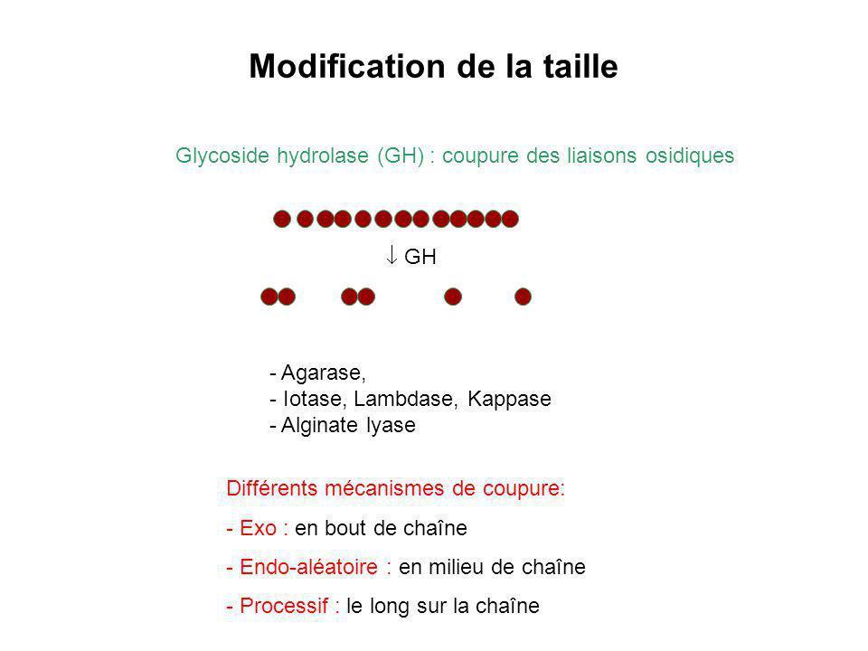 Modification de la taille Glycoside hydrolase (GH) : coupure des liaisons osidiques GH - Agarase, - Iotase, Lambdase, Kappase - Alginate lyase Différe