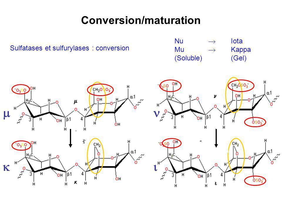 Conversion/maturation Sulfatases et sulfurylases : conversion Nu Iota Mu Kappa (Soluble)(Gel)