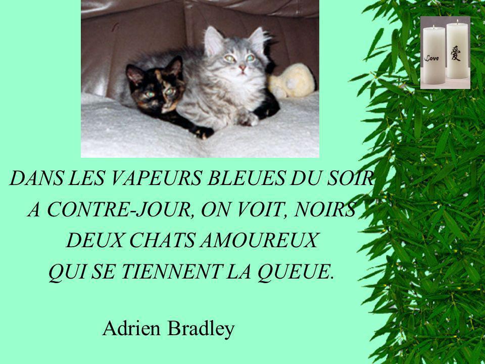 DANS LES VAPEURS BLEUES DU SOIR A CONTRE-JOUR, ON VOIT, NOIRS DEUX CHATS AMOUREUX QUI SE TIENNENT LA QUEUE. Adrien Bradley