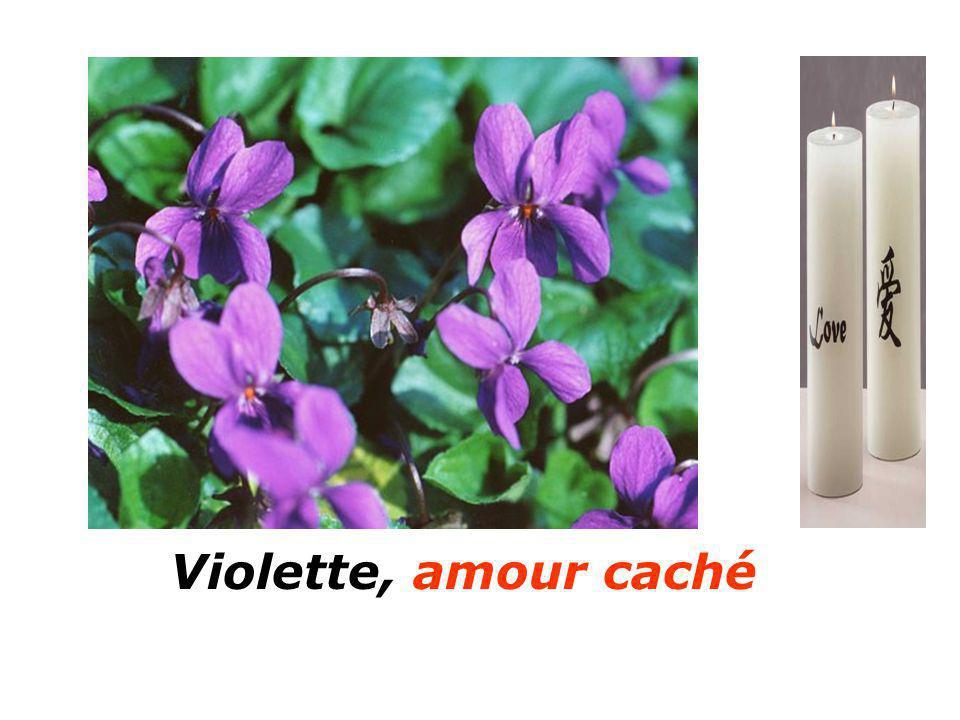 Violette, amour caché Aubépine soyez prudent Aubépine soyez prudent
