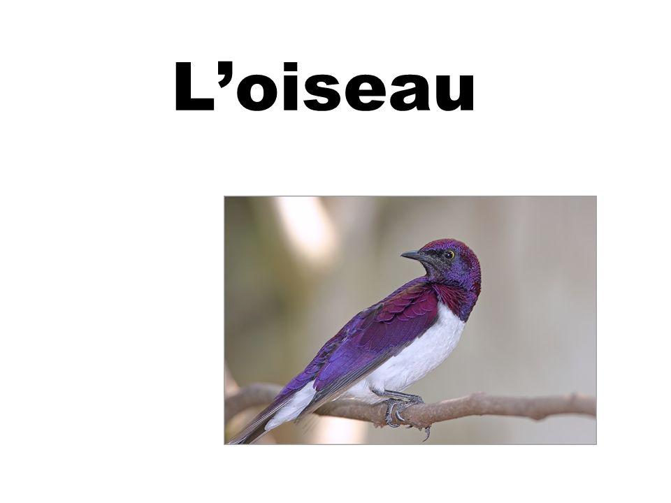 Loiseau