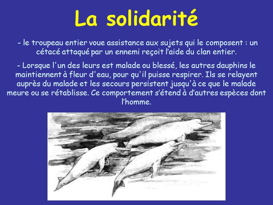 La solidarité - le troupeau entier voue assistance aux sujets qui le composent : un cétacé attaqué par un ennemi reçoit laide du clan entier. - Lorsqu