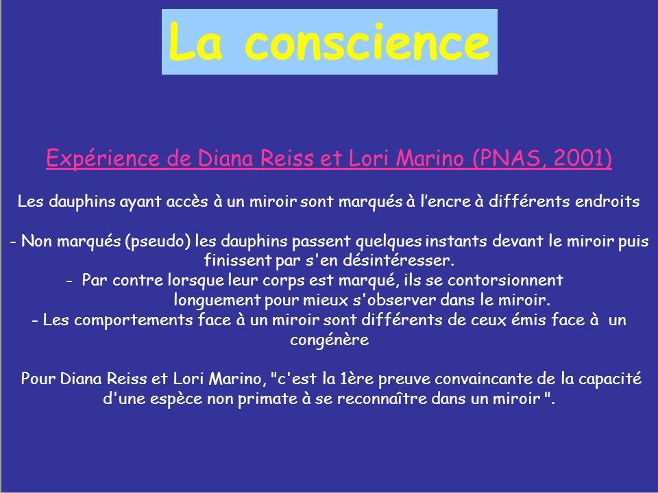 Expérience de Diana Reiss et Lori Marino (PNAS, 2001) Les dauphins ayant accès à un miroir sont marqués à lencre à différents endroits - Non marqués (