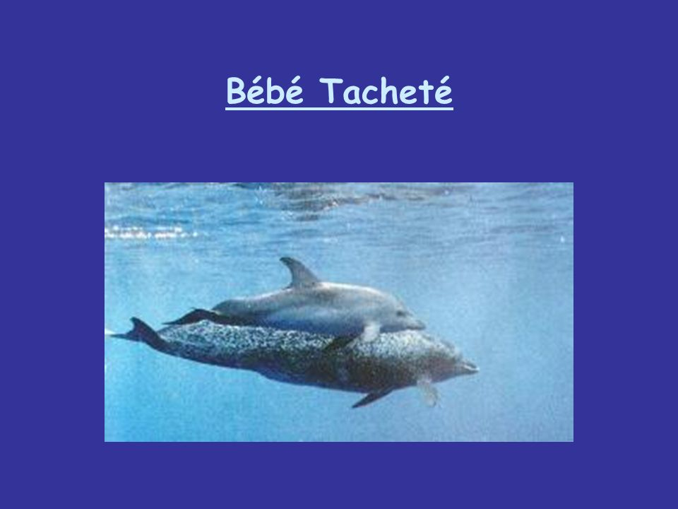 Bébé Tacheté