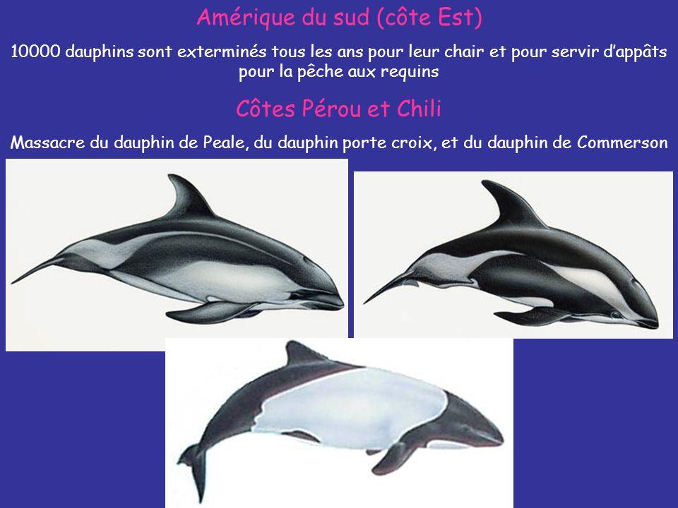 Amérique du sud (côte Est) 10000 dauphins sont exterminés tous les ans pour leur chair et pour servir dappâts pour la pêche aux requins Côtes Pérou et