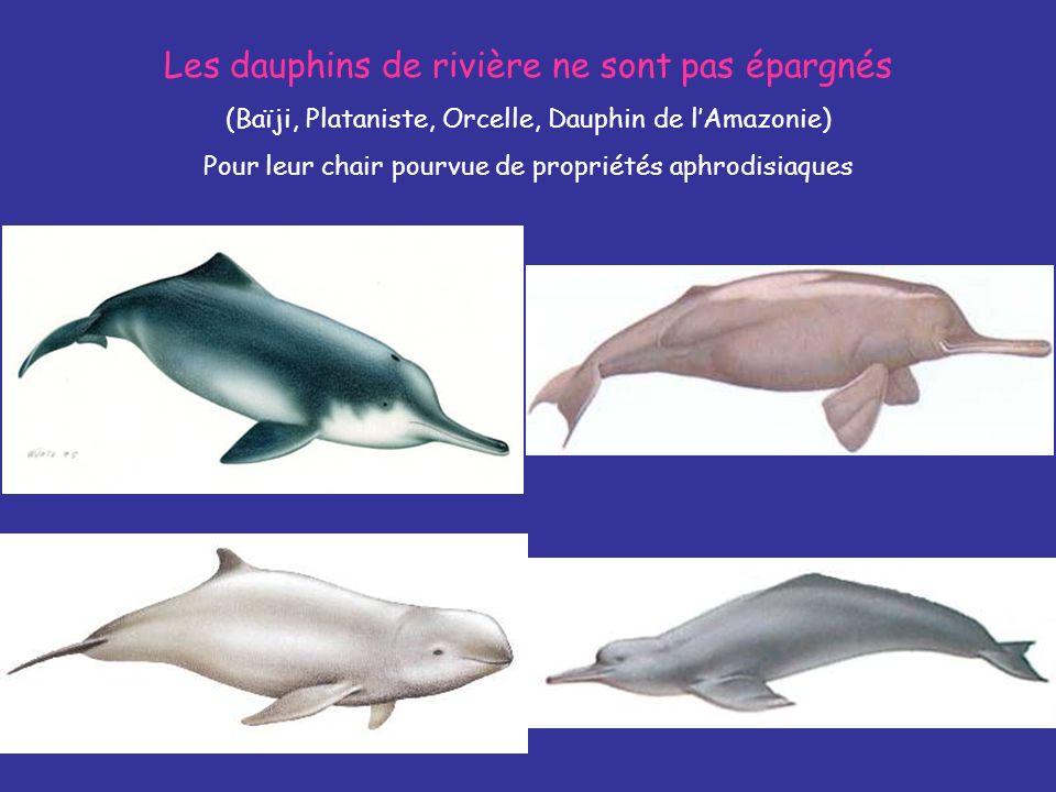 Les dauphins de rivière ne sont pas épargnés (Baïji, Plataniste, Orcelle, Dauphin de lAmazonie) Pour leur chair pourvue de propriétés aphrodisiaques