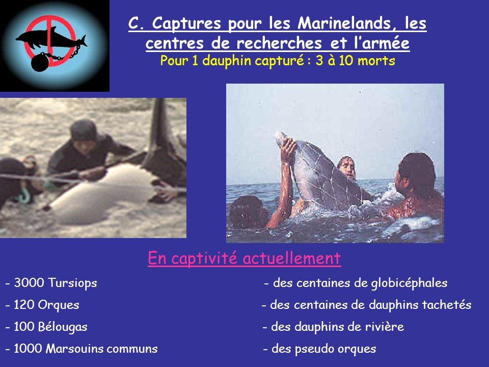 C. Captures pour les Marinelands, les centres de recherches et larmée Pour 1 dauphin capturé : 3 à 10 morts En captivité actuellement - 3000 Tursiops