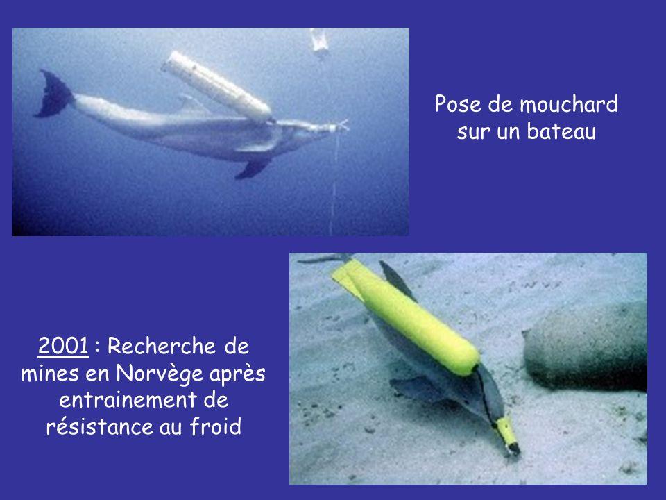 2001 : Recherche de mines en Norvège après entrainement de résistance au froid Pose de mouchard sur un bateau