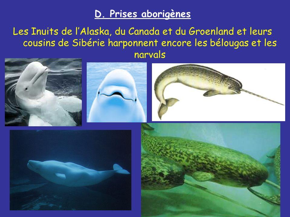 D. Prises aborigènes Les Inuits de lAlaska, du Canada et du Groenland et leurs cousins de Sibérie harponnent encore les bélougas et les narvals