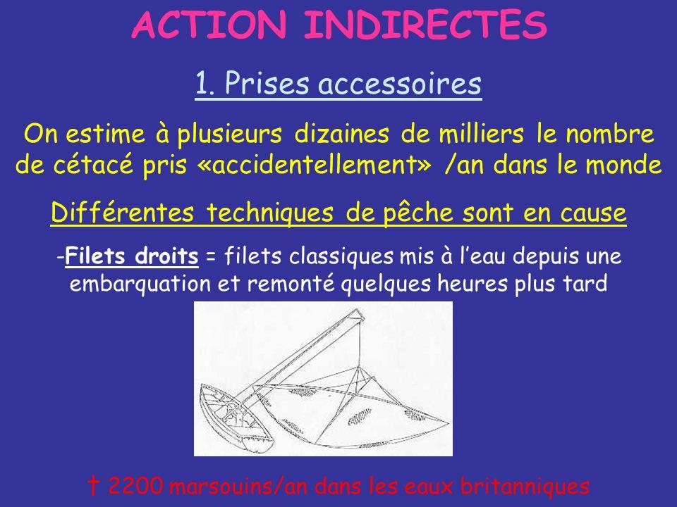 ACTION INDIRECTES 1. Prises accessoires On estime à plusieurs dizaines de milliers le nombre de cétacé pris «accidentellement» /an dans le monde Diffé