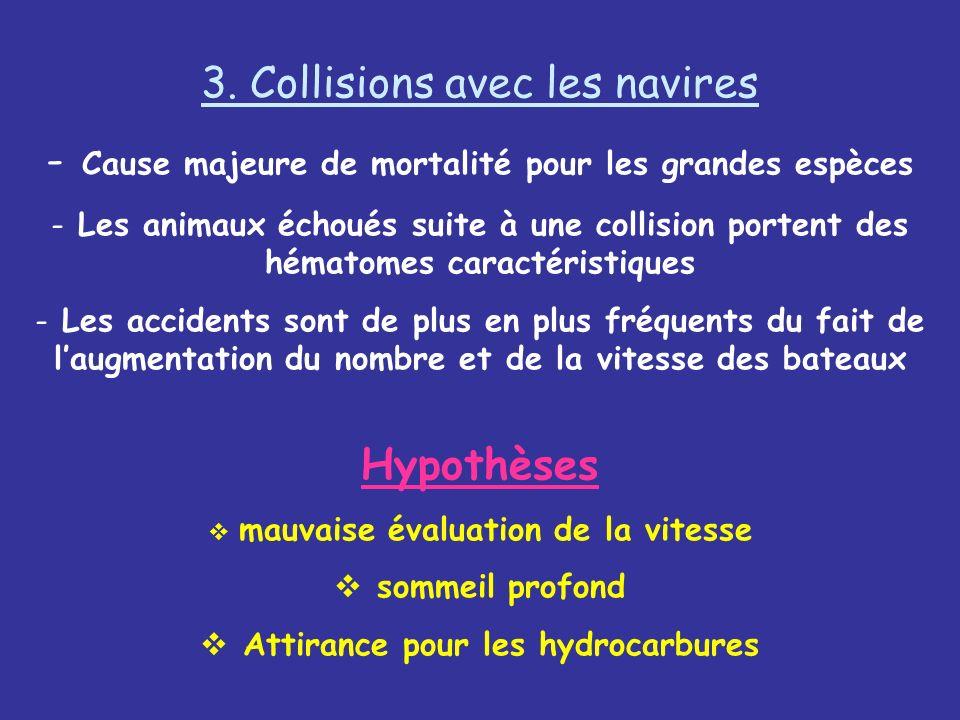 3. Collisions avec les navires - Cause majeure de mortalité pour les grandes espèces - Les animaux échoués suite à une collision portent des hématomes