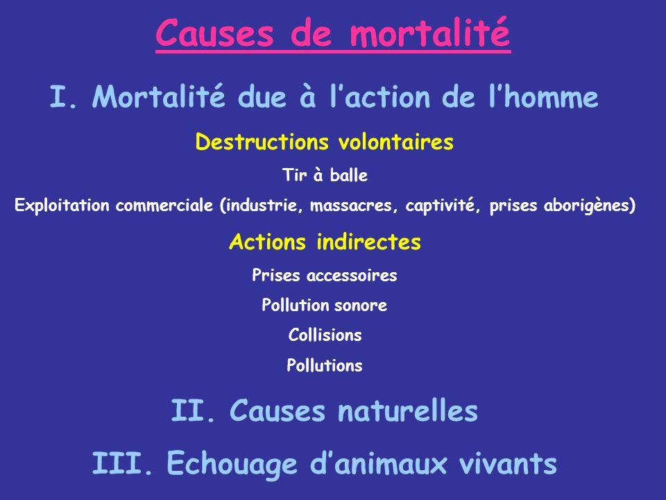 Causes de mortalité I. Mortalité due à laction de lhomme Destructions volontaires Tir à balle Exploitation commerciale (industrie, massacres, captivit