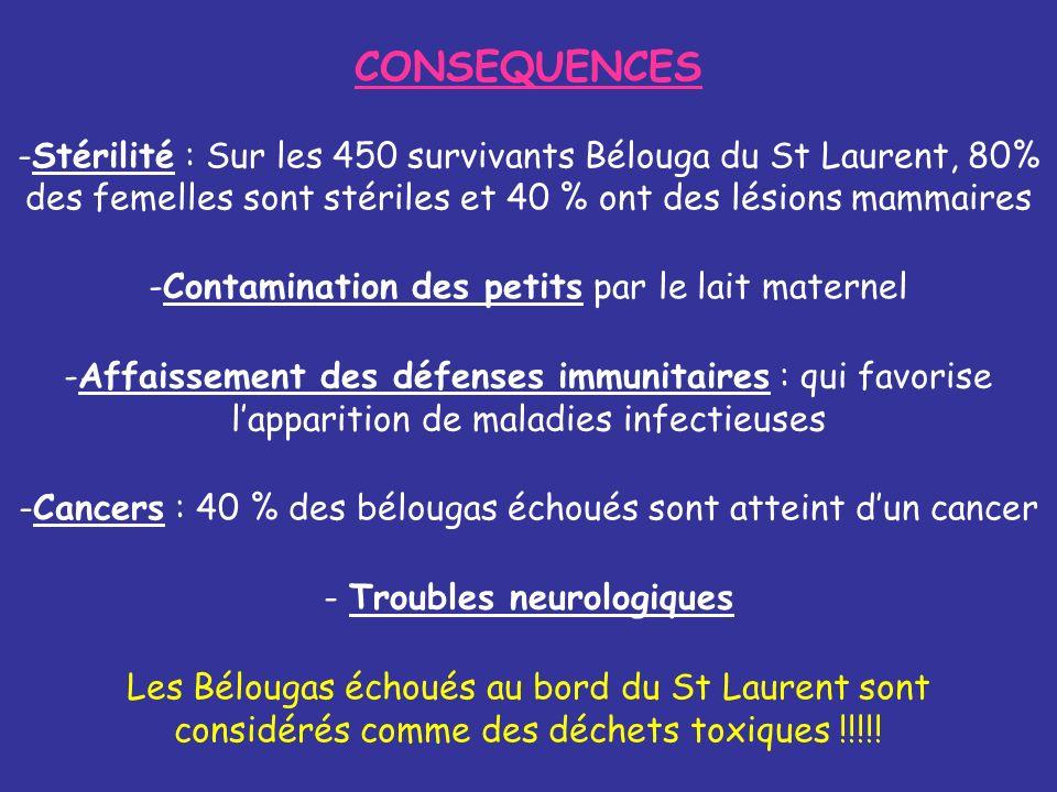 CONSEQUENCES -Stérilité : Sur les 450 survivants Bélouga du St Laurent, 80% des femelles sont stériles et 40 % ont des lésions mammaires Les Bélougas