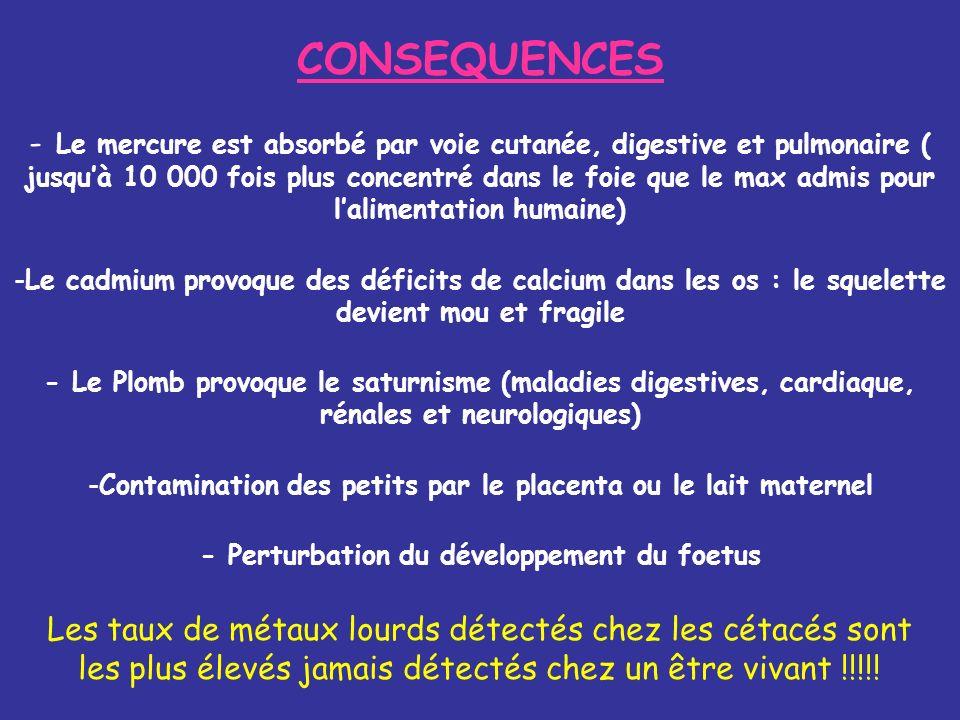 CONSEQUENCES - Le mercure est absorbé par voie cutanée, digestive et pulmonaire ( jusquà 10 000 fois plus concentré dans le foie que le max admis pour