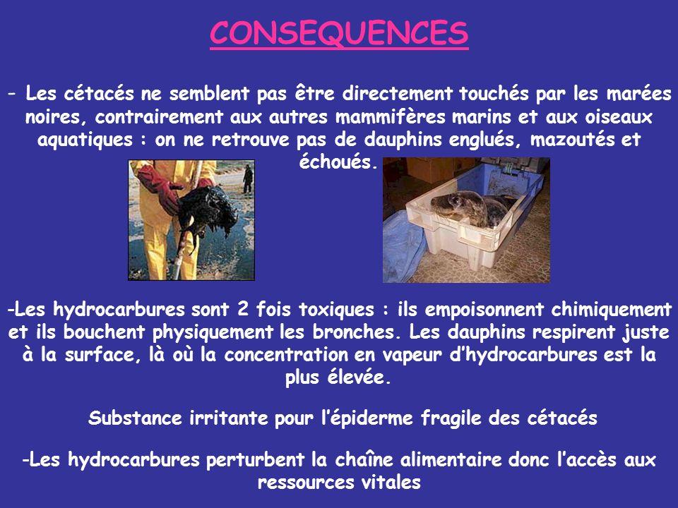 CONSEQUENCES - Les cétacés ne semblent pas être directement touchés par les marées noires, contrairement aux autres mammifères marins et aux oiseaux a